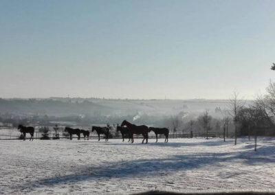 Koně ve stájích M+M Ptení v zimě